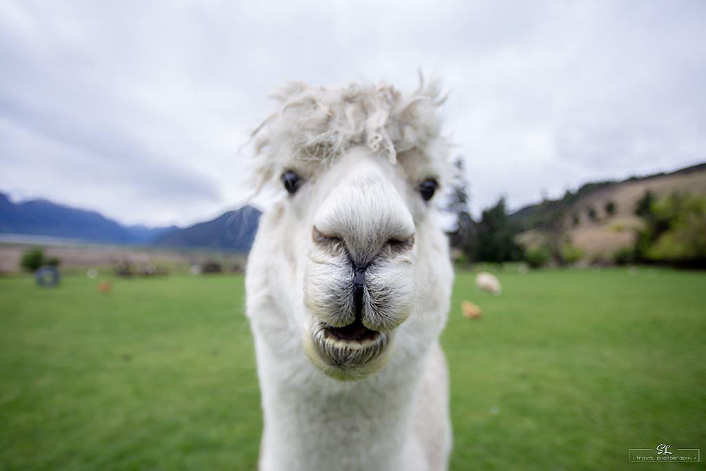 紐西蘭團旅 | 跟著 Star Travel 旅遊達人去旅行 | 探訪 Glenorchy 私人牧場